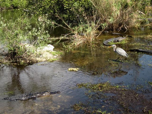 Florida 2013 1103