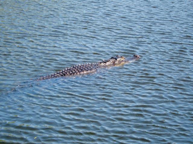 Florida 2013 1098