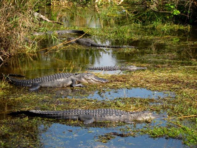 Florida 2013 1115