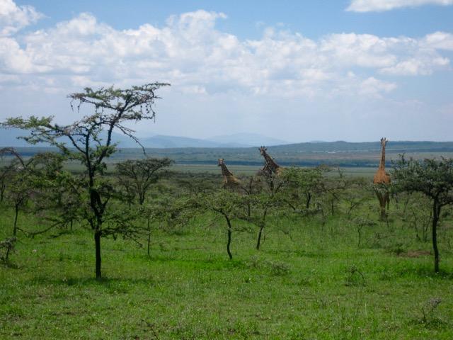 Nairobi 077